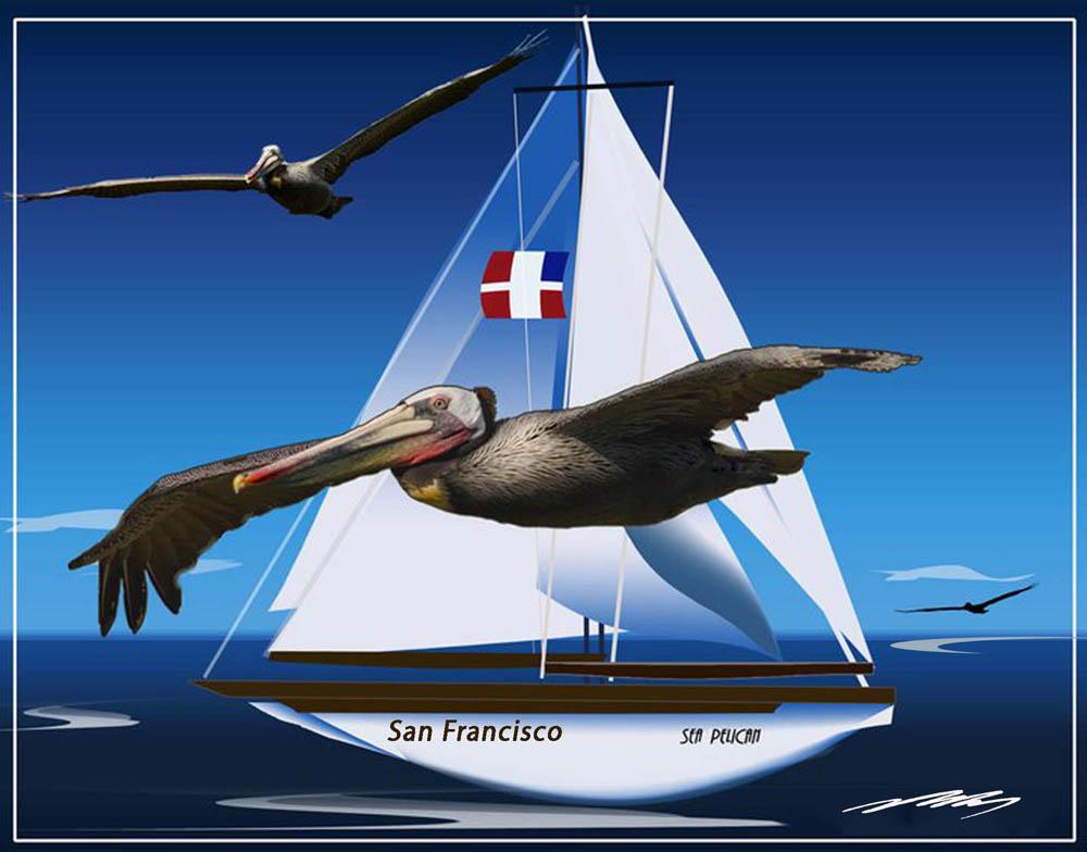 Sea Pelicans in Flight