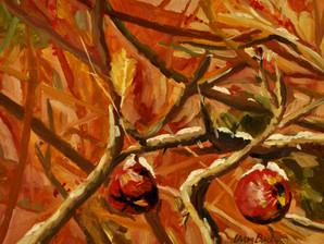 Maine Apples