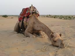 Ti trovi con una sete da camello dopo aver mangiato la pizza?