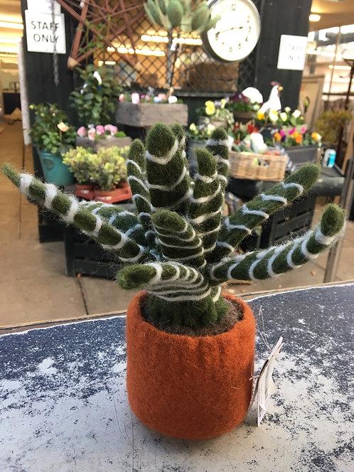 Cactus- Zebra