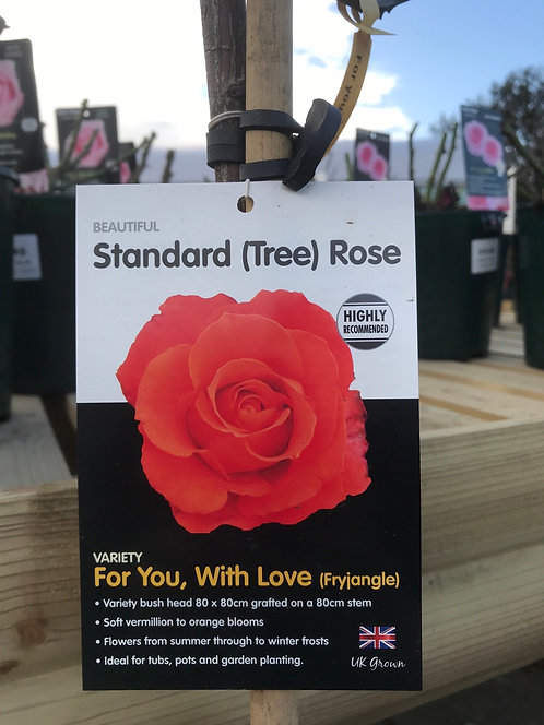 Rose Standard (Tree) ' For You, With Love'