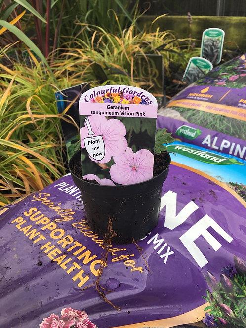 Geranium 'sanguineum Vision Pink' 9cm