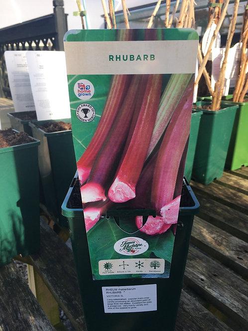 Rhubarb Victoria 3L