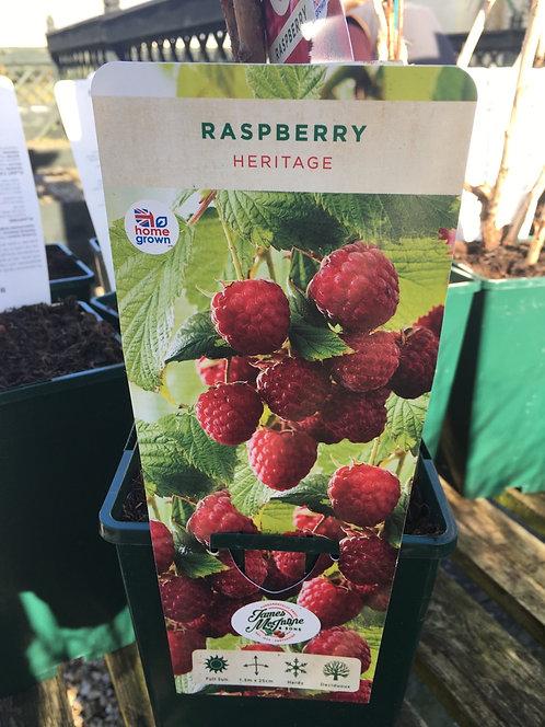 Raspberry Heritage 3L 5 Canes