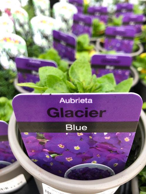 Aubrieta Glacier Blue
