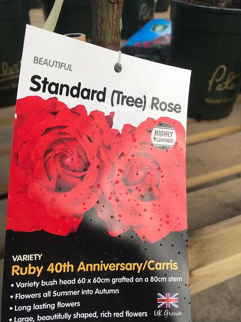 Rose Standard (Tree) ' Ruby 40th Anniversary/Carris'