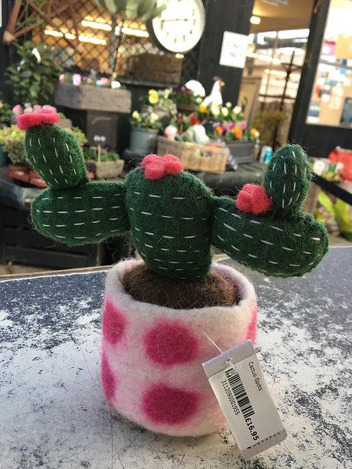 Cactus-Spots