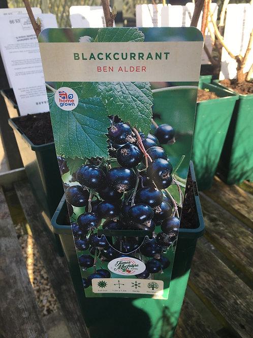 Blackcurrant Ben Alder 3L
