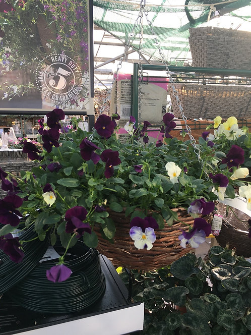 """14"""" Pansy Cool Wave Berries and Cream Wicker Basket"""