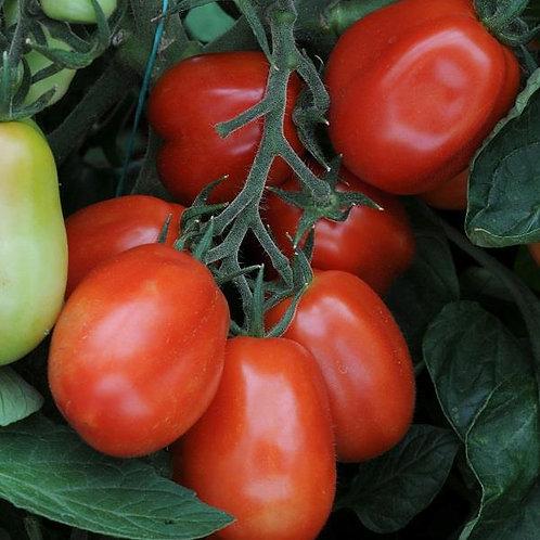 Tomato Roma 10.5cm