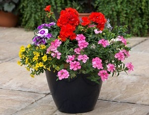 "Multicoloured Mix 14"" Wicker Hanging Basket"