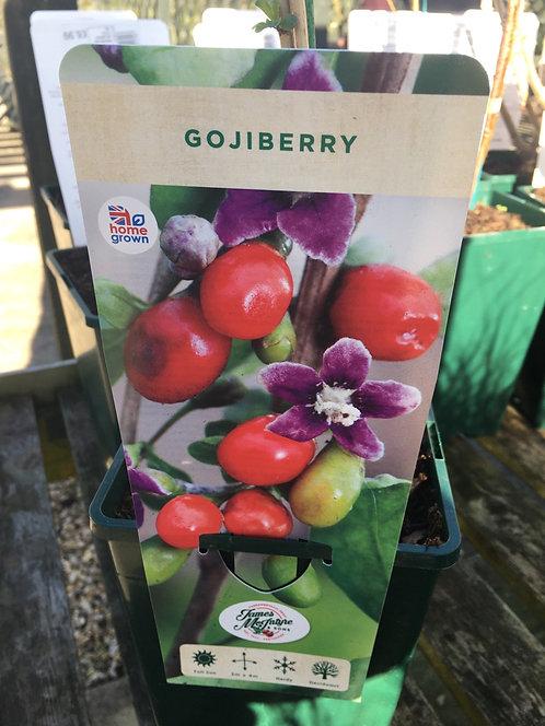 Gojiberry 3L