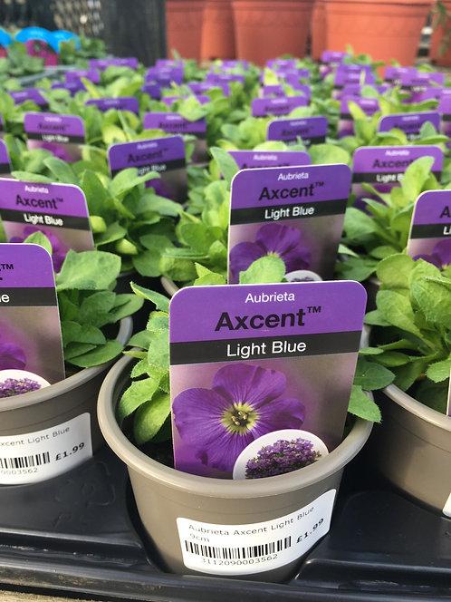 Aubretia Light Blue 9cm