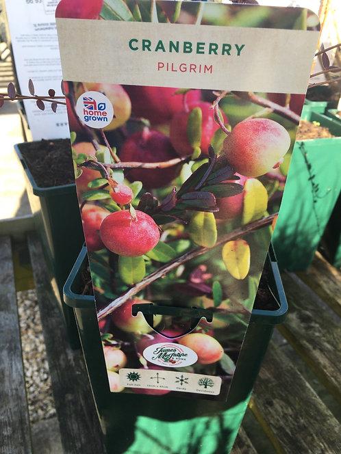 Cranberry Pilgrim 3L