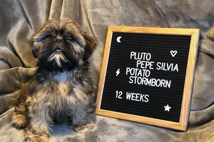 Pluto - 12 weeks.jpg
