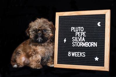 Pluto 8 Weeks.jpg
