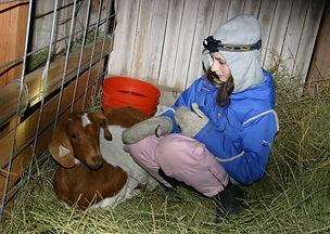 2014 Goat 4.JPG