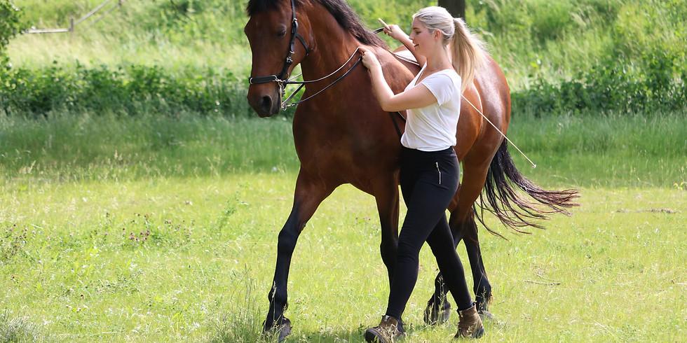Classical Horse (Rehabilitation) Training