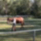 Schermafbeelding 2020-05-03 om 09.46.26.