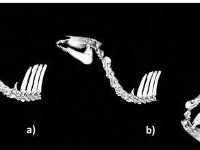 The equine neck and its function during movement and locomotion
