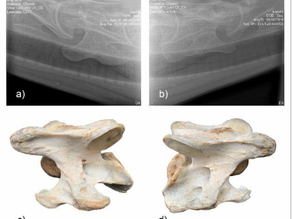 Radiographic Technique for Assessment of Morphologic Variations of the Equine Caudal Cervical Spine