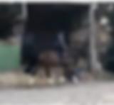 Schermafbeelding 2019-09-30 om 19.46.05.