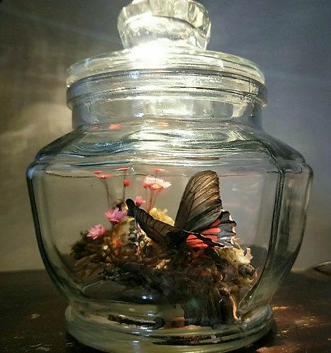 'Sweet Landing' Preserved Butterfly Jar