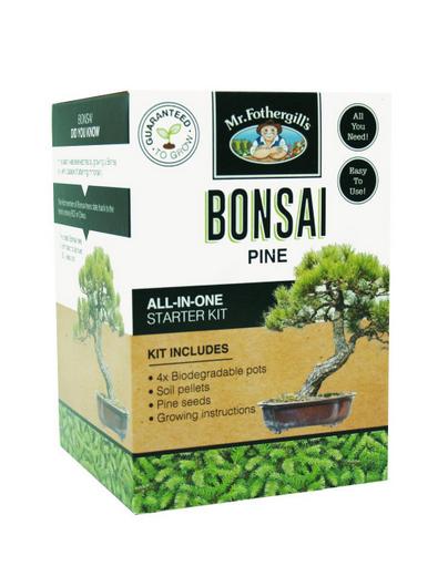 Bonsai Starter Kit - Pine Tree