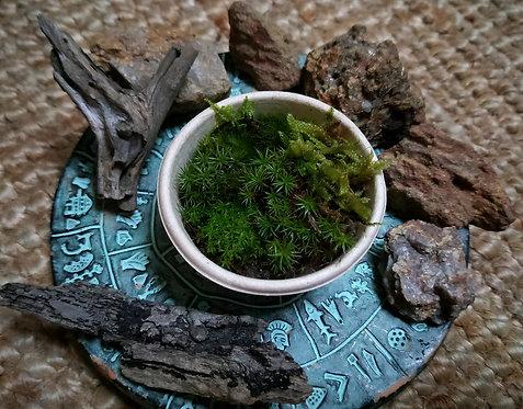 Kit Bits - Natural Terrarium Accessories
