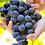 Thumbnail: El yapımı kırmızı şarap - 75 CC