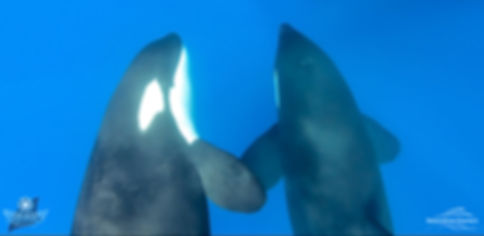 Orca Bremer Bay