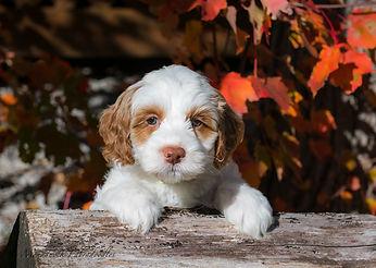 white puppy.jpg