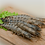 Thumbnail: 冷冻黑虎虾