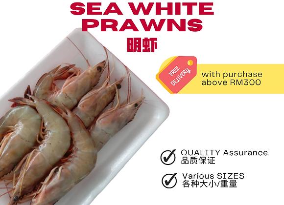 冷冻海白虾