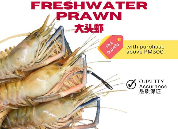 Freshwater Prawn U2  2pcs/kg