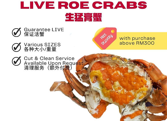 Live Roe Crab