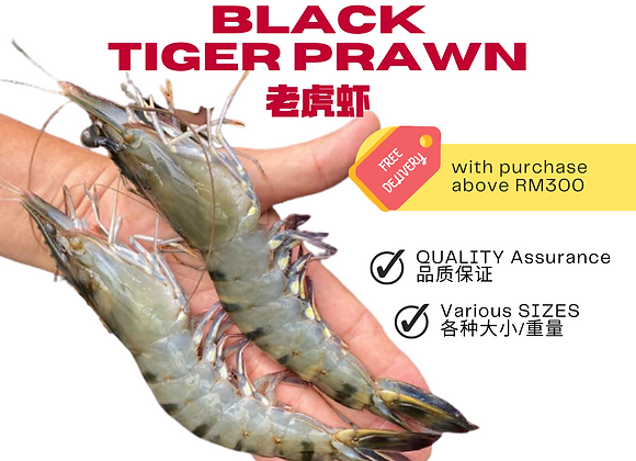 Frozen Black Tiger Prawn