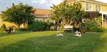 back yard with dogs lounging