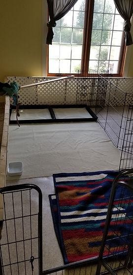 Puppy Room divided