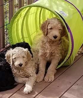 Lucy's pups having fun on the deck