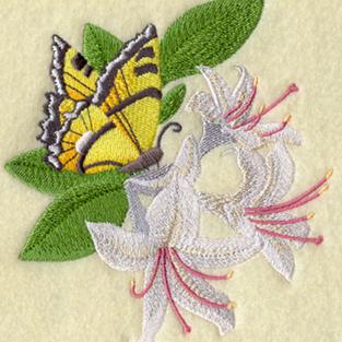 Honeysuckle butterfly