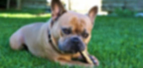 french-bulldog-4452293__340_edited.jpg