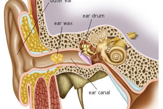 ear-wax-diagram-480x321.jpg.jpg