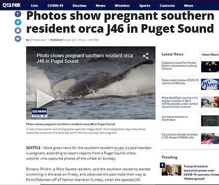 orca q13fox story.JPG