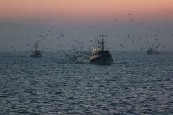 Pescerecci in pesca