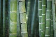 bamboo-3028709_1920.jpg