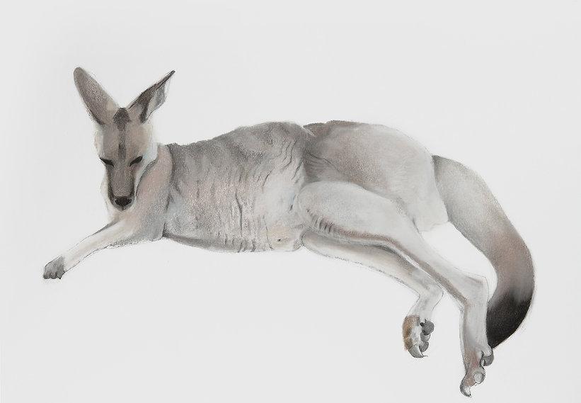 kangaroe kopie.jpg