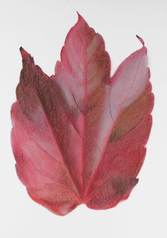 rood blad kopie.jpg