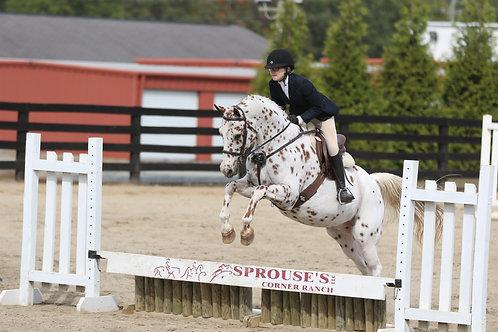 27. Pony Hunter Course B
