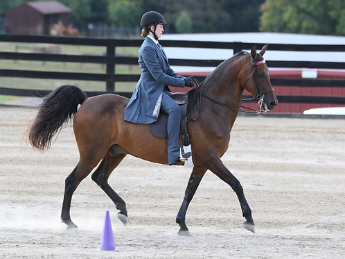 52. English Equitation Pattern